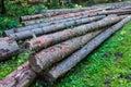 Tree trunks on the ground Royalty Free Stock Photos