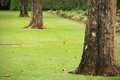 Tree trunks on the lawn Royalty Free Stock Images