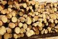 Tree trunks many large felled Royalty Free Stock Images