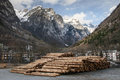 Tree trunks stack of trees in the italian alps Stock Images