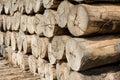 Tree trunks stacked Royalty Free Stock Photo