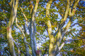 Tree trunks straggly in the summer sunshine Royalty Free Stock Images