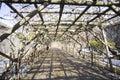 Tree tunnel Royalty Free Stock Photo