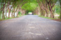 Tree tunnel road Royalty Free Stock Photo