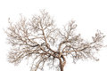 Tree twigs with bare trunks and branches Royalty Free Stock Photo