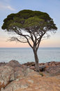 Tree at Twilight Royalty Free Stock Photo