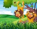 A tree with two playful lions Royalty Free Stock Photo
