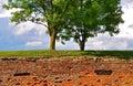 Tree under a blue sky Royalty Free Stock Photo