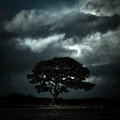 Tree under stormy skies oswestry shropshire england a lone in the countyrside Stock Photos