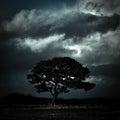 Tree under stormy skies, Oswestry, Shropshire, England Royalty Free Stock Photo