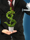 Tree US dollar. Royalty Free Stock Photo