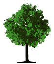 Tree (vector) Royalty Free Stock Image