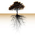 A tree with a visible root. Space for a text Royalty Free Stock Photo