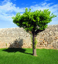 Tree and wall Royalty Free Stock Photos