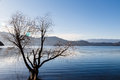 Tree in the water at lugu lake sichuan china january Stock Photography