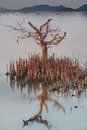 Tree On Water
