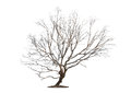 Tree on white background Stock Photos