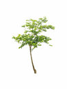 Tree on white background show nature concept Stock Photos