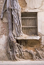 Tree in the window Royalty Free Stock Photo