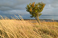 tree in windy weather Royalty Free Stock Photo