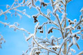 Tree  in the winter covered with snow on background the blue sky Royalty Free Stock Photo