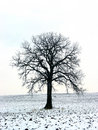 Tree in a winter field 1 Stock Images