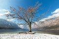 Tree in winter Royalty Free Stock Photo