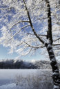 Tree in winter landscape germany Royalty Free Stock Photo