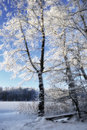 Tree in winter landscape germany Royalty Free Stock Photography
