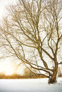 Tree in winter season nature composition Stock Photo