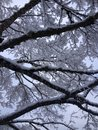 stock image of  Tree