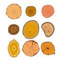Tree wood slices vector set