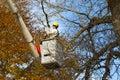 Tree work Royalty Free Stock Photo