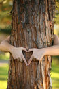 Treehugger Royalty Free Stock Photography