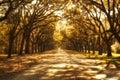 Stromy horiace v južnej plantáž