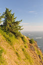 Trees along the ocean cliff oregon coastline highway Stock Photos