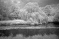 Trees along stream in infrared light in nordhorn germany Stock Image