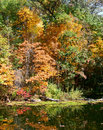 Trees in autumn mood with multicolored reflected a pond Royalty Free Stock Photos
