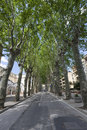 Trees on avenue in Sant`Agata DE Goti, in italy
