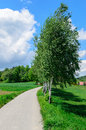 Trees (birches) near narrow road leading to village Royalty Free Stock Photo