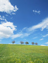 Trees with blue sky (20)