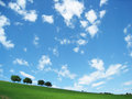 Trees with blue sky and clouds (8)