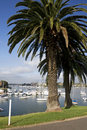 Trees and Boats at Birkenhead Point, Sydney Royalty Free Stock Photography