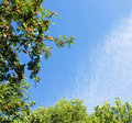 Trees branches on blue sky Stock Image