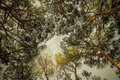 Trees and bright sky, looking up in the sky. Royalty Free Stock Photo