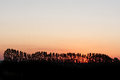 Trees on bucolic view of sunset scene rural region Royalty Free Stock Images