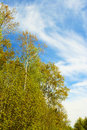 Trees and bushes grow in the woods in the early fall on the backdrop of the sky with clouds Royalty Free Stock Images