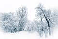 Trees and bushes under heavy snow in a blue winter tone Royalty Free Stock Images