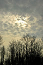 Trees, clouds and birds Royalty Free Stock Photo