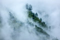 Trees in clouds peacful serene scenery mountain forest himalayas kullu valley himachal pradesh india Stock Images